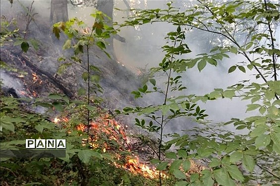 آتش سوزی در جنگل های توسکا چشمه گلوگاه مازندران