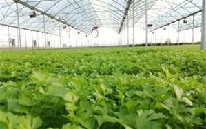 فاز یک گلخانه صنعتی تولید نشای سبزی و صیفی در نیشابور افتتاح شد