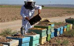 برداشت عسل از ۳۴۸ هزار کندو در گیلان آغاز شد