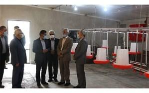۲ پروژه دانشگاهی گیلان با حضور معاون وزیر علوم افتتاح شد