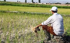 دولت سیزدهم برای کشاورزان گره گشا باشد