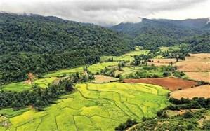 صدور رأی دیوان عالی کشور در پرونده وقف جنگلهای آقمشهد
