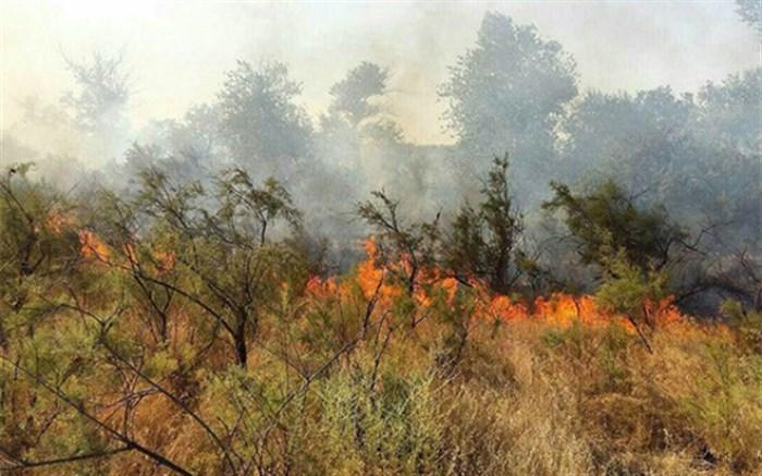 درختان بلوط جنگلهای شبلیز دنا در آتش  میسوزد
