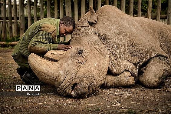 تصاویر برگزیده مردمی در مسابقه سالانه عکاسی از حیات وحش