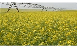 افزایش ۴۱ درصدی تولیدات زراعی کشت و صنعت مغان