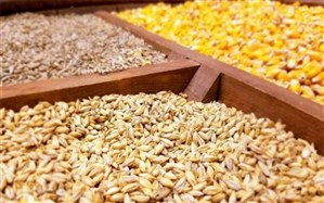 کیفیت رمز توسعه پایدار و تضمین کننده بازار فروش عوامل کنترل زیستی در نظام حفظ نباتات کشور