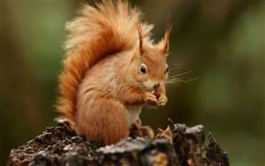 تعقیب و گریز دیدنی و خندهدار دو سنجاب بازیگوش روی تنه درخت/فیلم