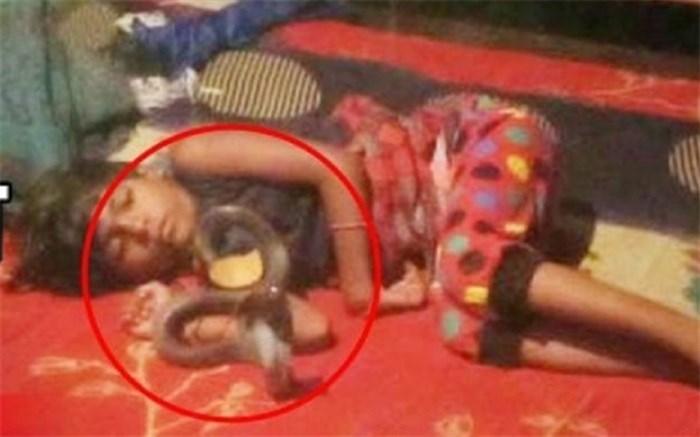 صحنه وحشتناک حلقه زدن مار کبرا به دور گردن کودک!