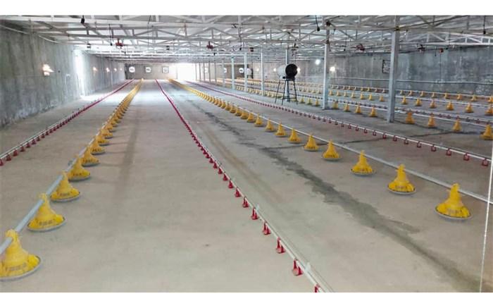 ۶٣ متقاضی در انتظار کسب مجوز برای ایجاد واحد پرورش مرغ در میرجاوه هستند