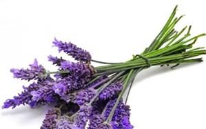 بوی بد دهان را با گیاه رفع کنید