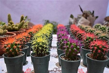 جشنواره ملی گل و گیاه در مجتمع شهید عظیمی بابلسر | Alireza Asgharzadeh
