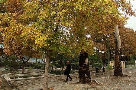بارش باران پاییزی در تهران | Bahman Sadeghi