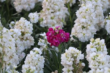 باغ گیاه شناسی مشهد  | Amir Hossein Yeganeh