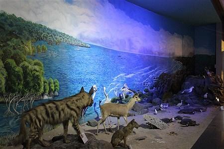 موزه حیات وحش پارک پردیسان تهران | Fateme Qadam Zadeh