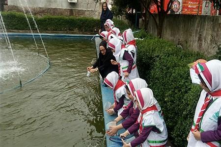 رهاسازی ماهی قرمز | Zahra Zare
