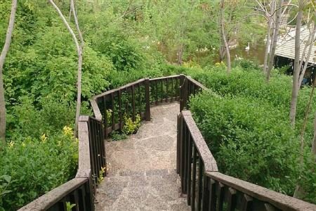 طبیعت زیبا و دیدنی باغ پرند گان | sheyda mashhour
