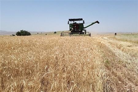 برداشت گندم و کلزا از مزارع شهرستان لالی | Ahmad Khorasani