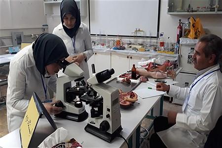 مسابقات آزمایشگاهی  خوارزمی | Fatemeh Rezaee