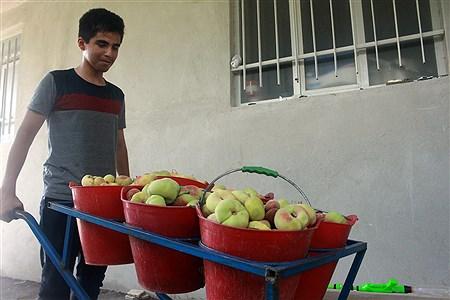 دومین جشنواره هلو  استان آذربایجان شرقی در شهرستان شبستر،شهر شند آباد برگزار شد. | Mobin Akhash
