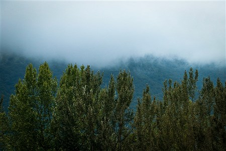 مسیر سبز | Roxana Tahani