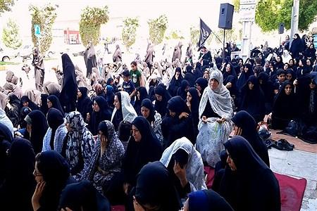 روز عاشورا در محله بهمنی بوشهر | Abbas Heidari