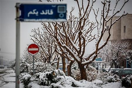 بارش برف زمستانی در تهران | Ali Sharifzade