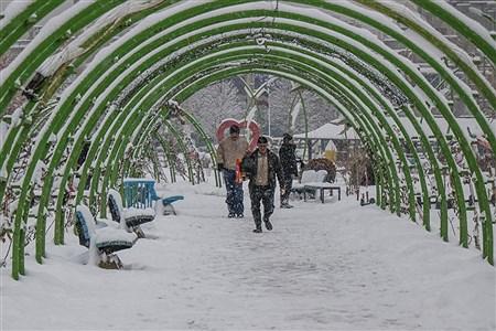 بارش برف در ارومیه | Amir Hosein Mollazade