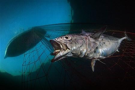 برندگان مسابقه سال عکاسی زیر آب  | UPY2020