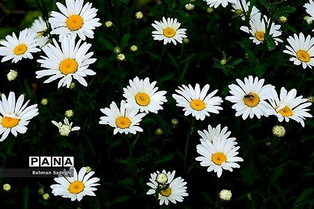 باغ گیاه شناسی ملی ایران |