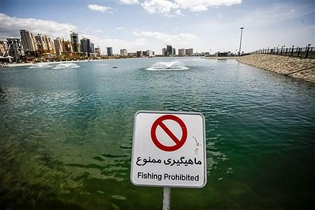 روز طبیعت در دریاچه چیتگر | Ali Sharifzade