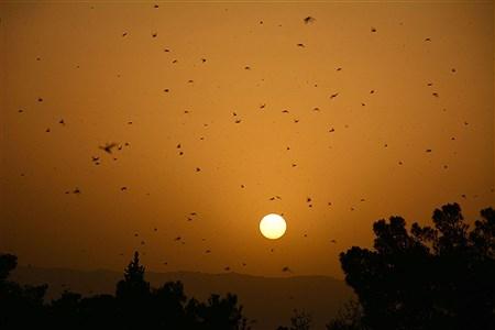 حمله ملخها | Received