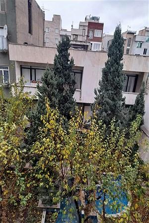 منطقه 8- آن سوی قرنطینه | Arefeh Daliri