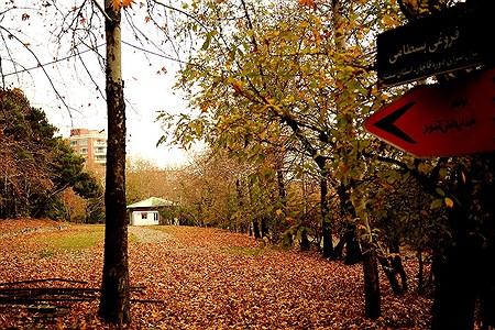 پاییز باهنر | Arshideh Shahangi
