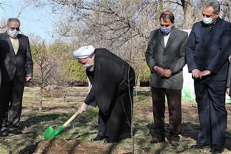 مراسم روز ملی درختکاری | president.ir