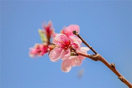 شکوفه های بهاری - ده غیبی | Amir Hossein Yeganeh
