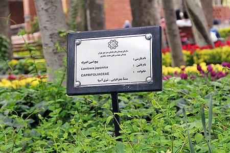 فرصت دیدن لالهها در باغ ایرانی را از دست ندهید    | SOMAYEH NIKFEKR